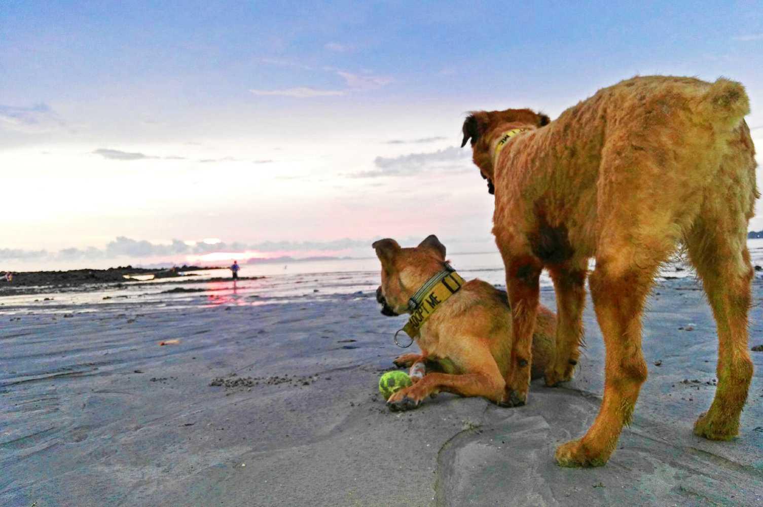 Lanta Animal Welfare, walking dogs on the beach.