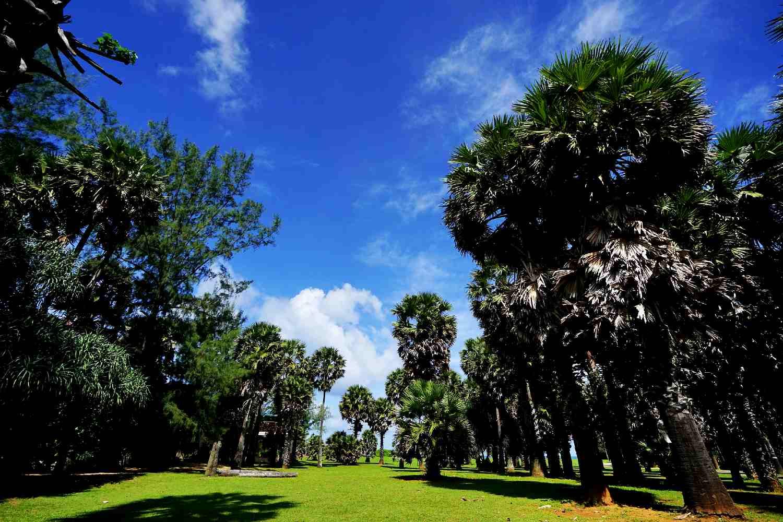 Koh Lanta National Park palmbomen aan het strand