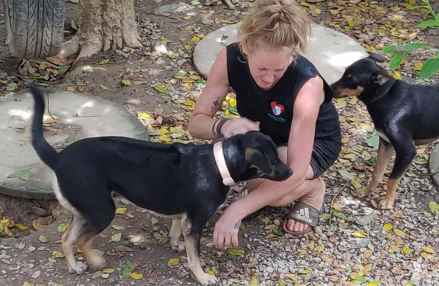Lanta Animal Welfare, volunteer plays with dogs.