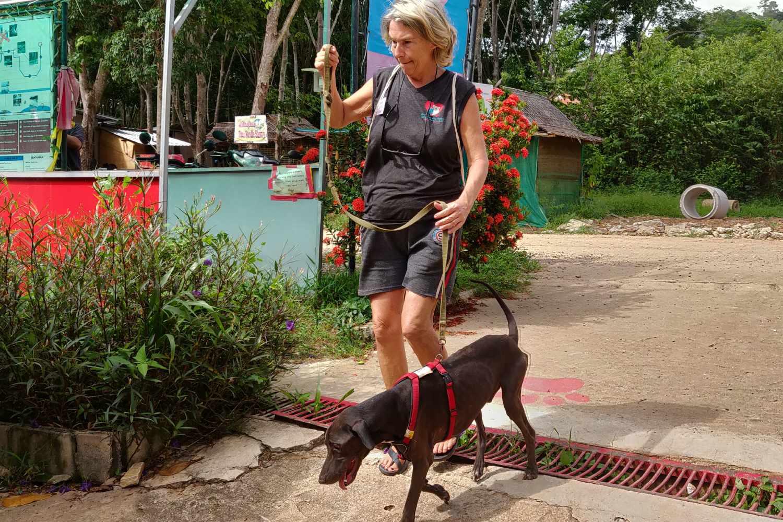 Lanta Animal Welfare, hond uit laten op het strand van Koh Lanta