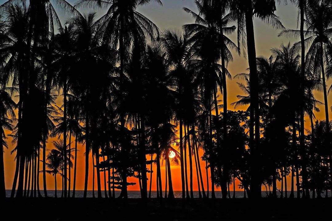Sunset between the palm trees on Koh Lanta