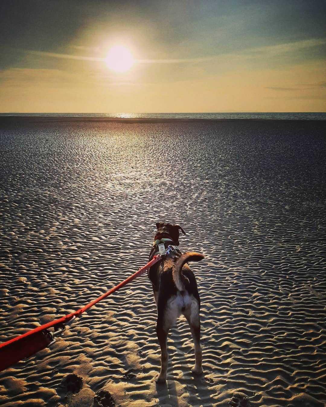 Hondje op het strand van Koh Lanta