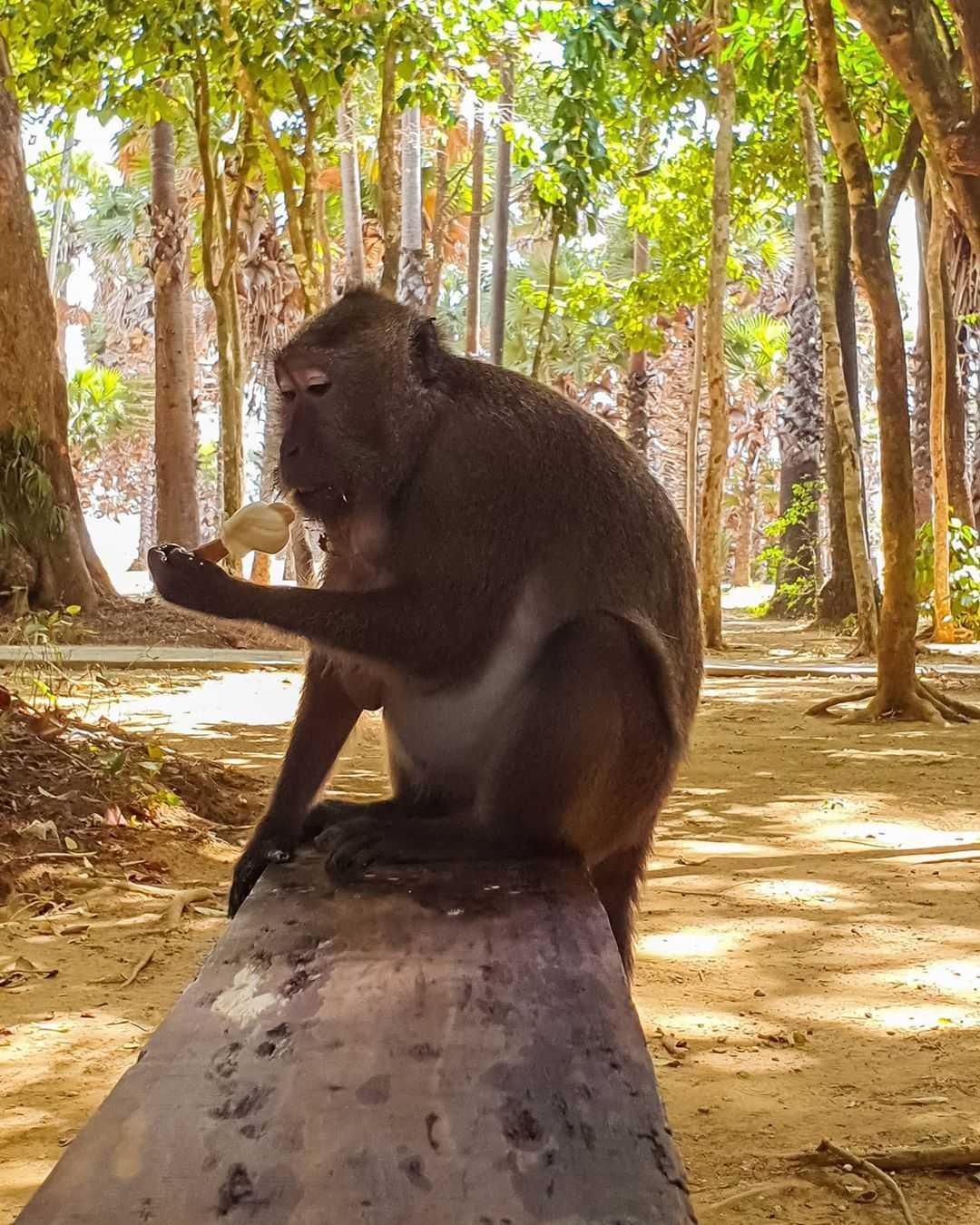Aapje in het nationale park van Koh Lanta