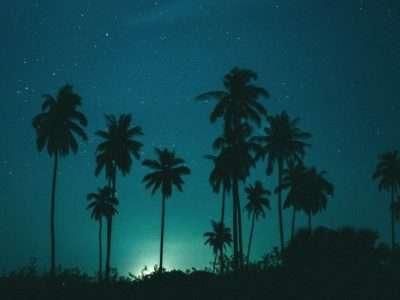 Palmbomen In De Nacht Op Koh Lanta