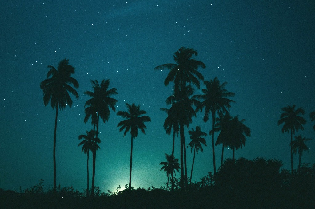 Palm trees in the night on Koh Lanta