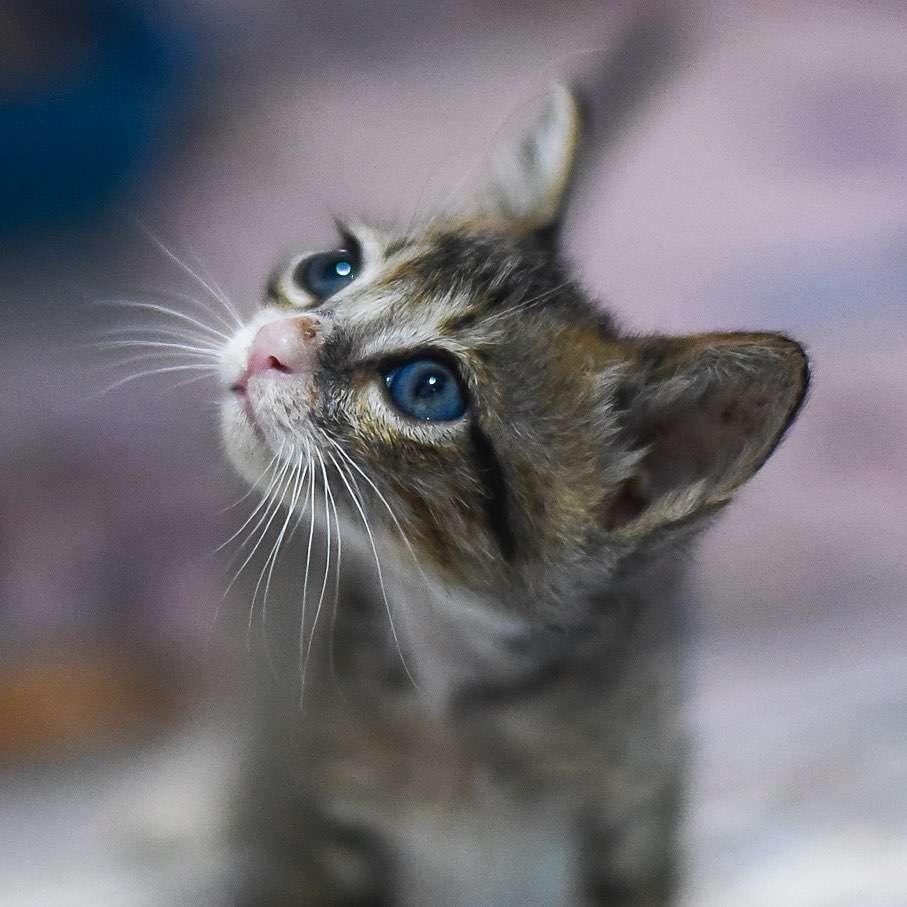 Young kitten at Lanta Animal Welfare