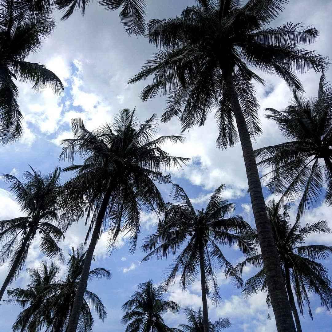 Palmbomen op Koh Lanta, Thailand