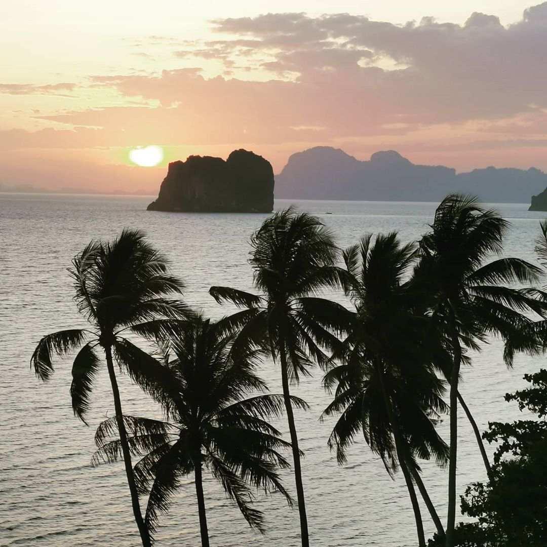 Palmbomen met uitzicht op zee