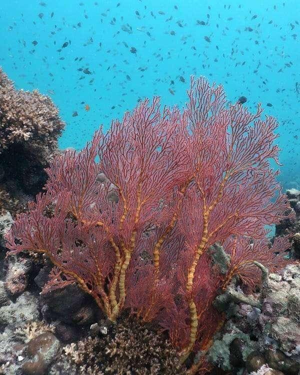 Coral in the ocean of Koh Kradan, Thailand