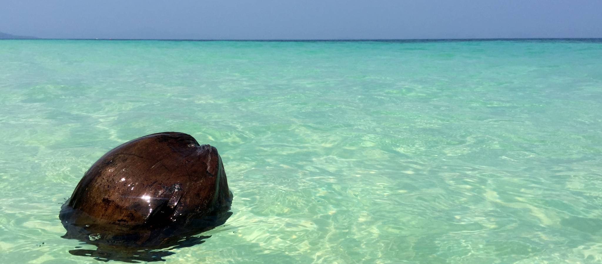 Floating coconut in the beautiful blue-green clear water of the sea of Koh Kradan