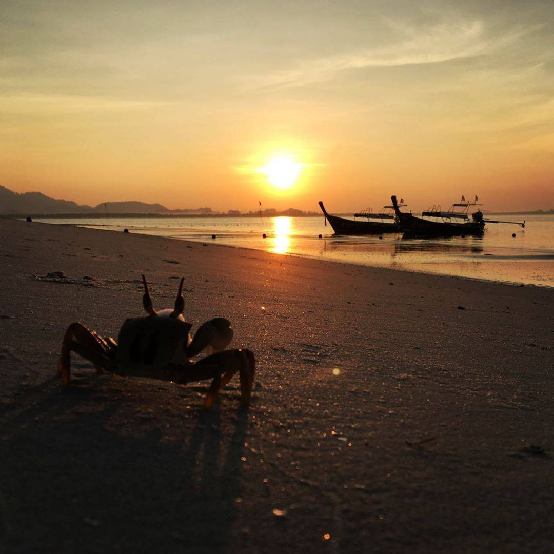 A crab at sunset on Koh Mook
