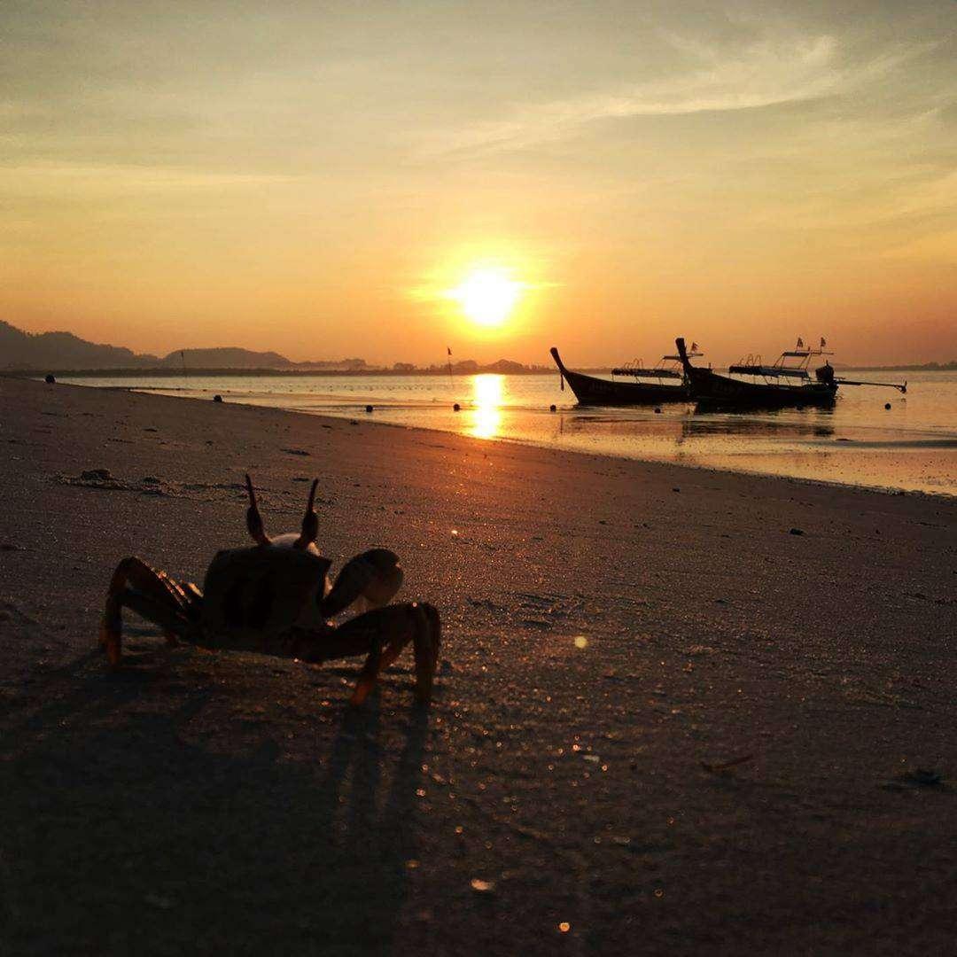 Een krab tijdens zonsondergang op Koh Mook