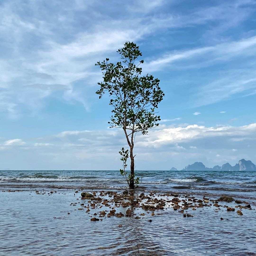 Boom aan de zee op Koh Mook