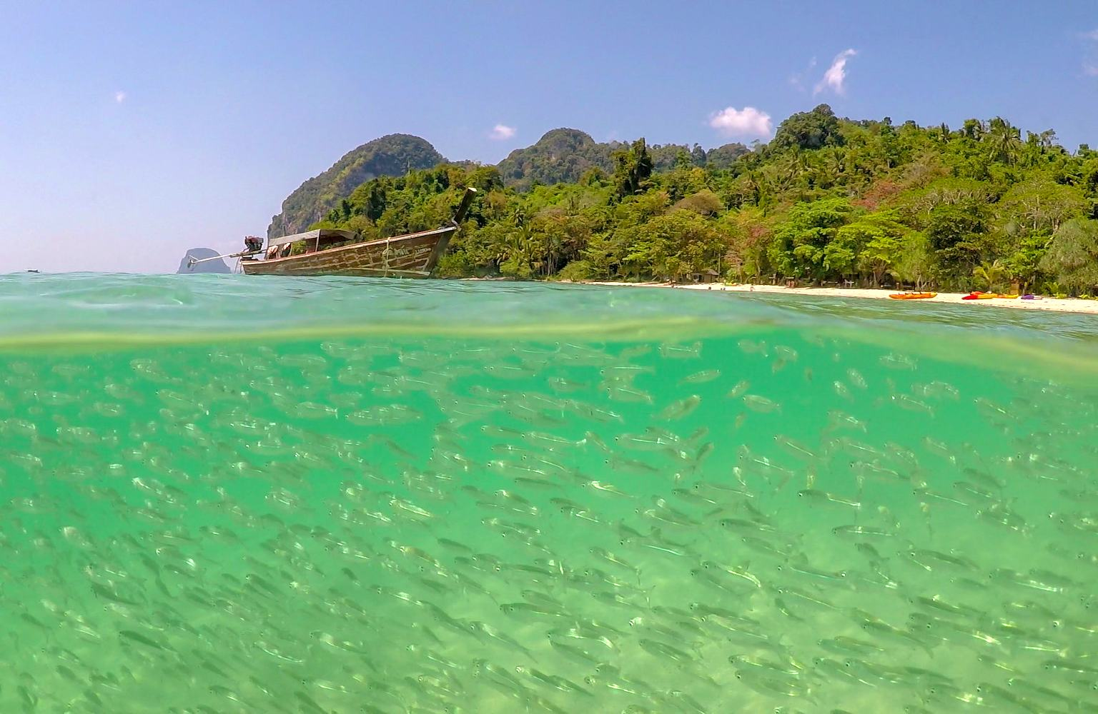 Crab on Farang Beach / Charly Beach, blue sea with fish and longtail boat the beach of Koh Mook
