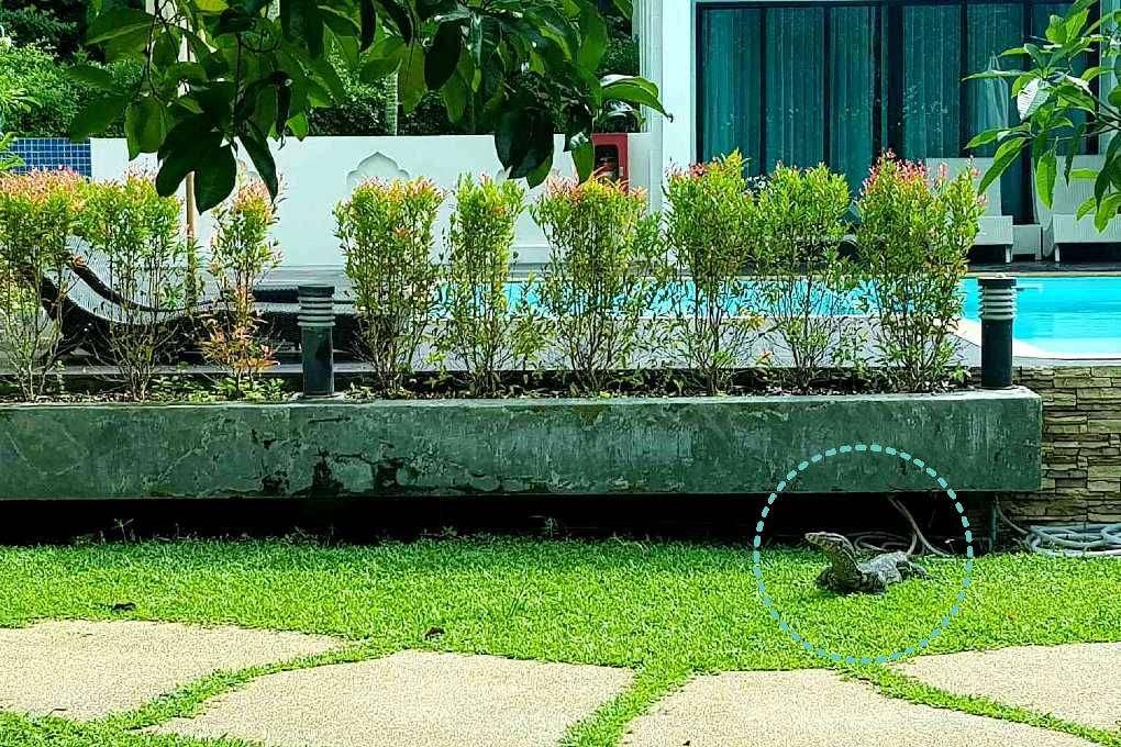 Varaan in de tuin bij het zwembad van het MookLamai Resort