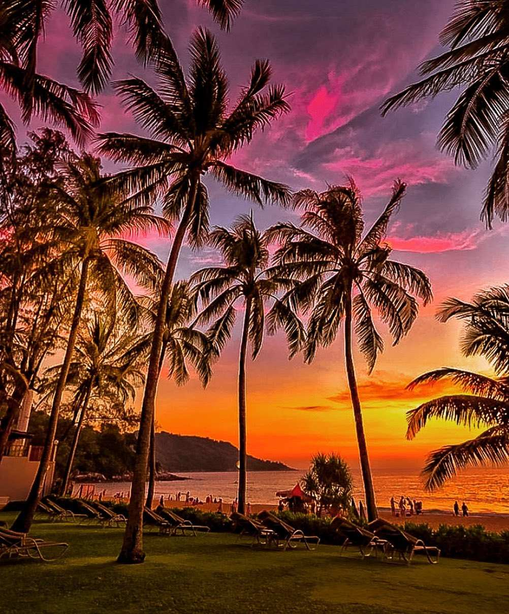 Palm trees at sunset on Koh Tao