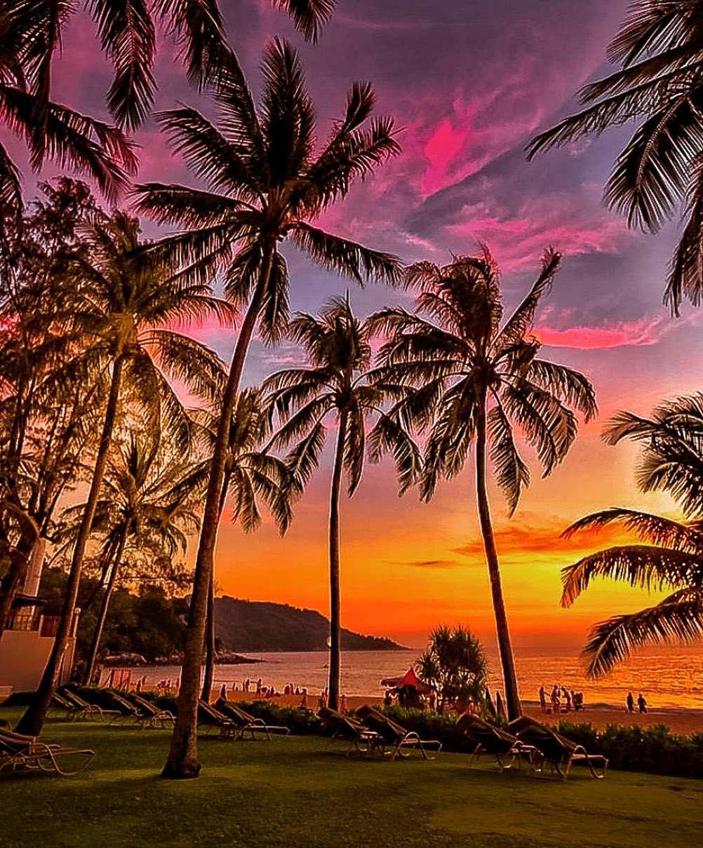 Palmbomen tijdens zonsondergang op Koh Tao