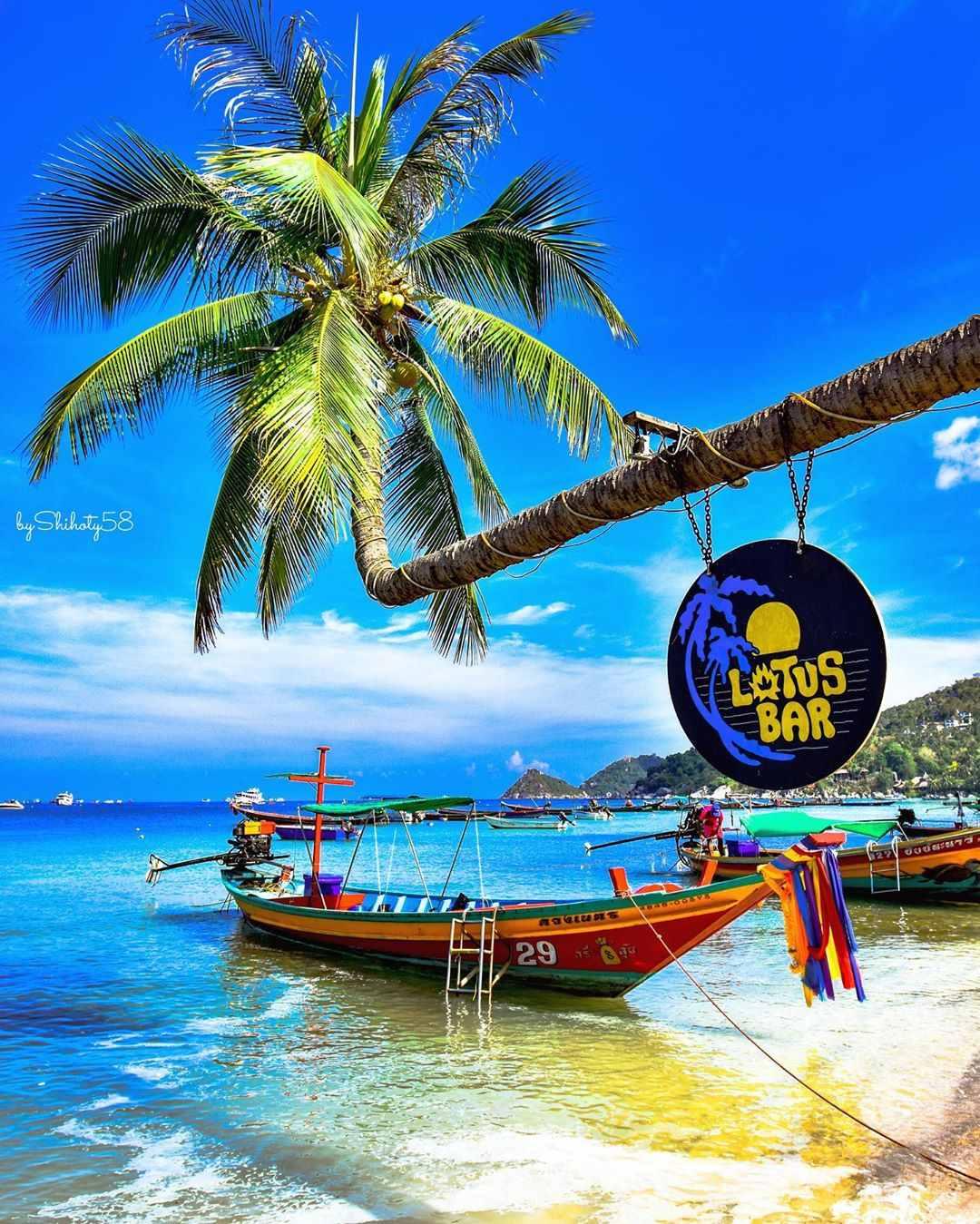 De palmboom van Lotus Bar op Sairee Beach, Koh Tao