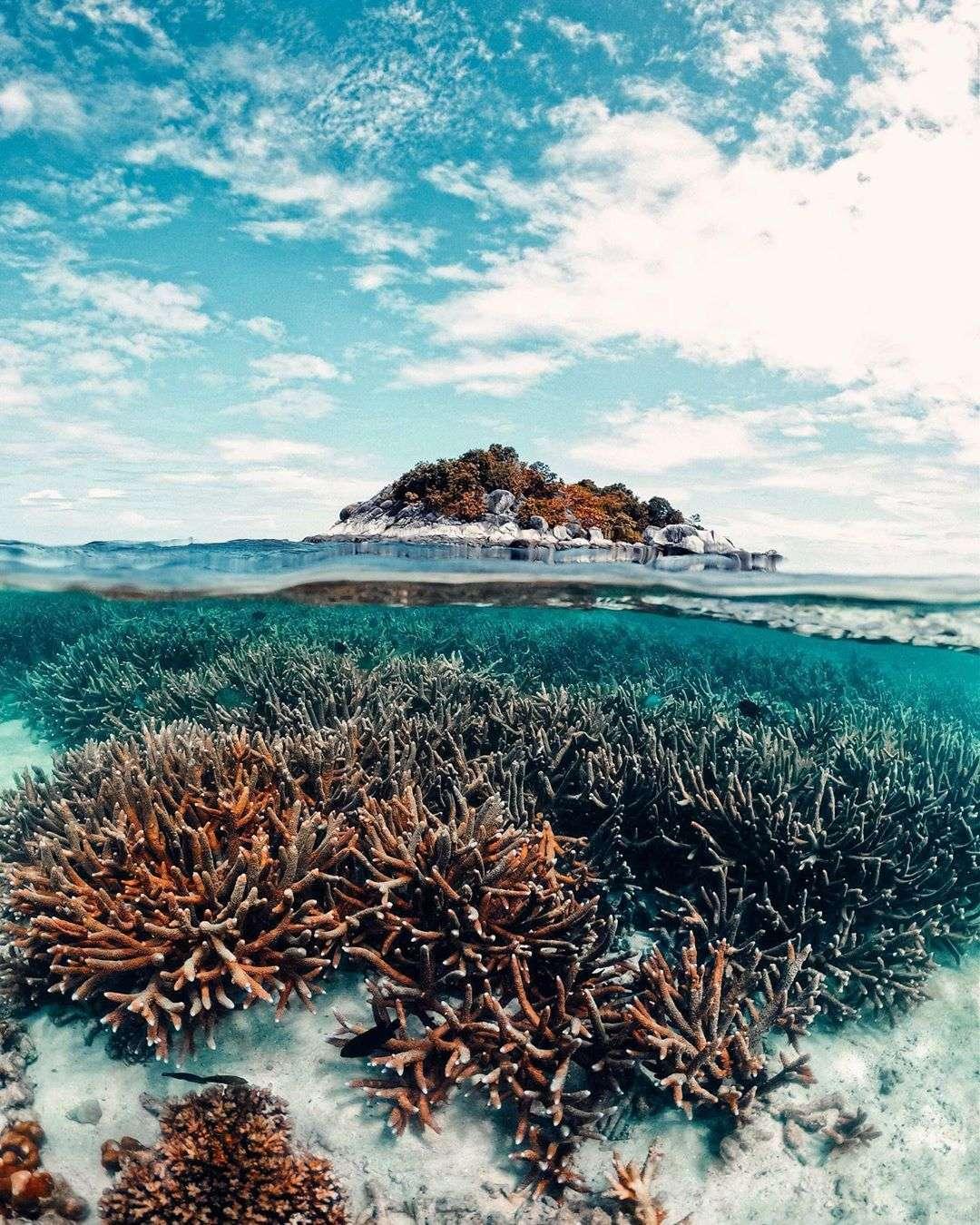 Koraal in de zee van Koh Lipe