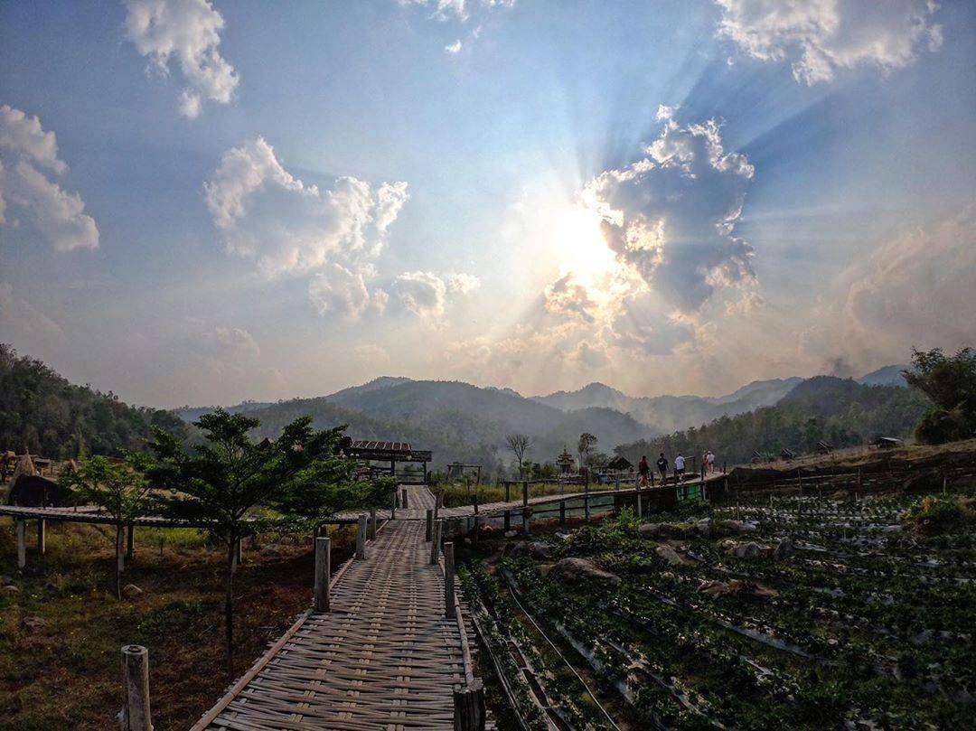 Loopbrug door de rijstvelden van Pai