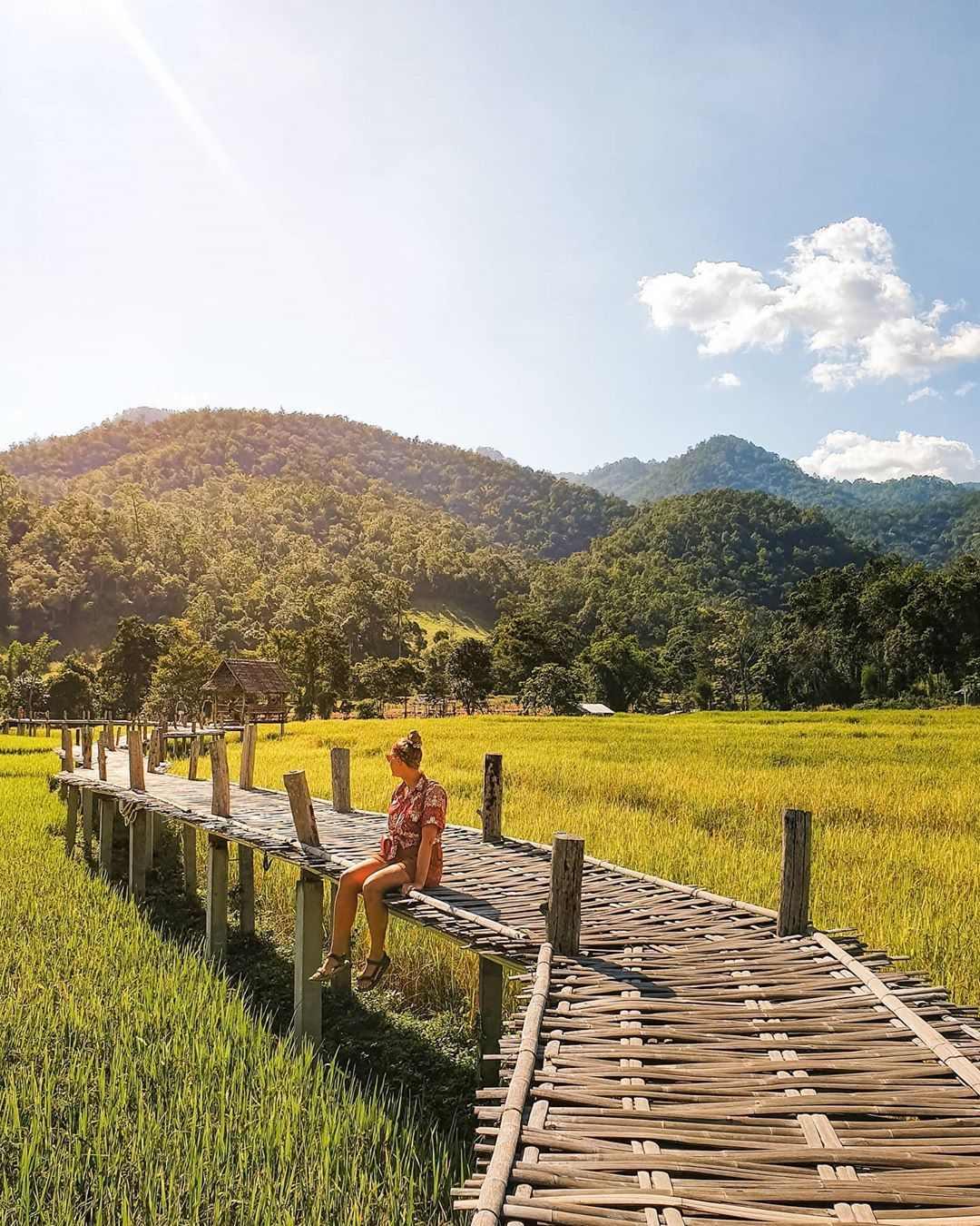 Loopbrug over rijstvelden van Pai