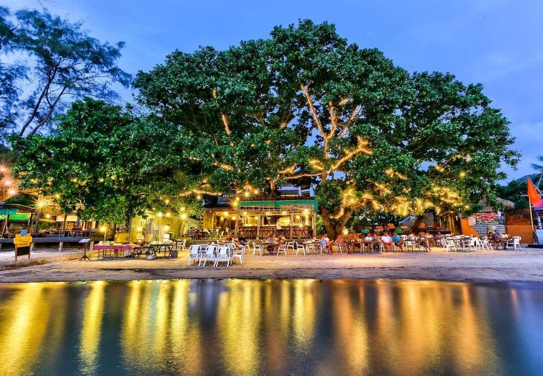 Mooi boom aan het strand van Koh Tao