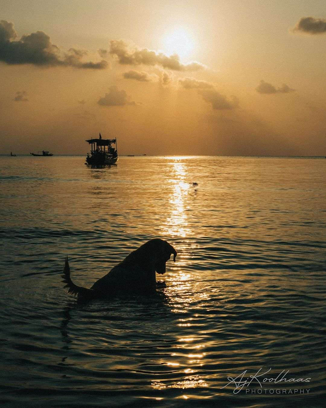 Dog fishing in the sea of  Koh Tao