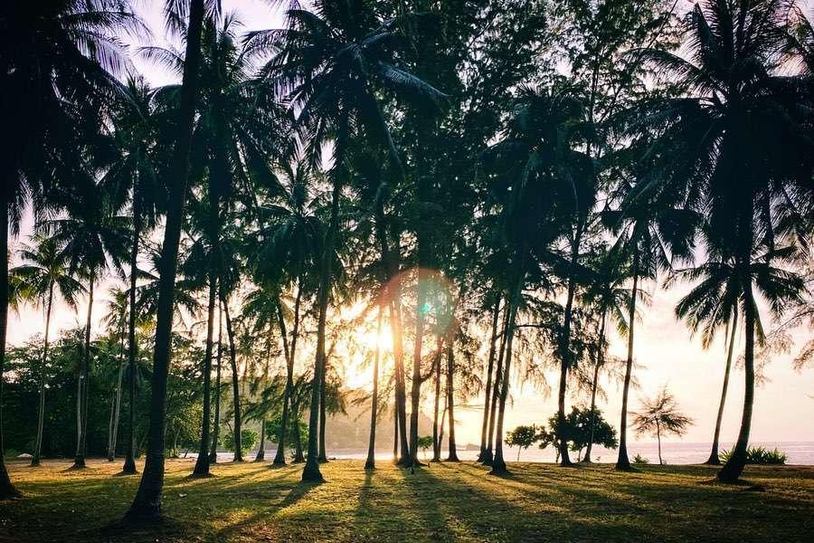 Zon door palmbomen in het Tarutao National Park