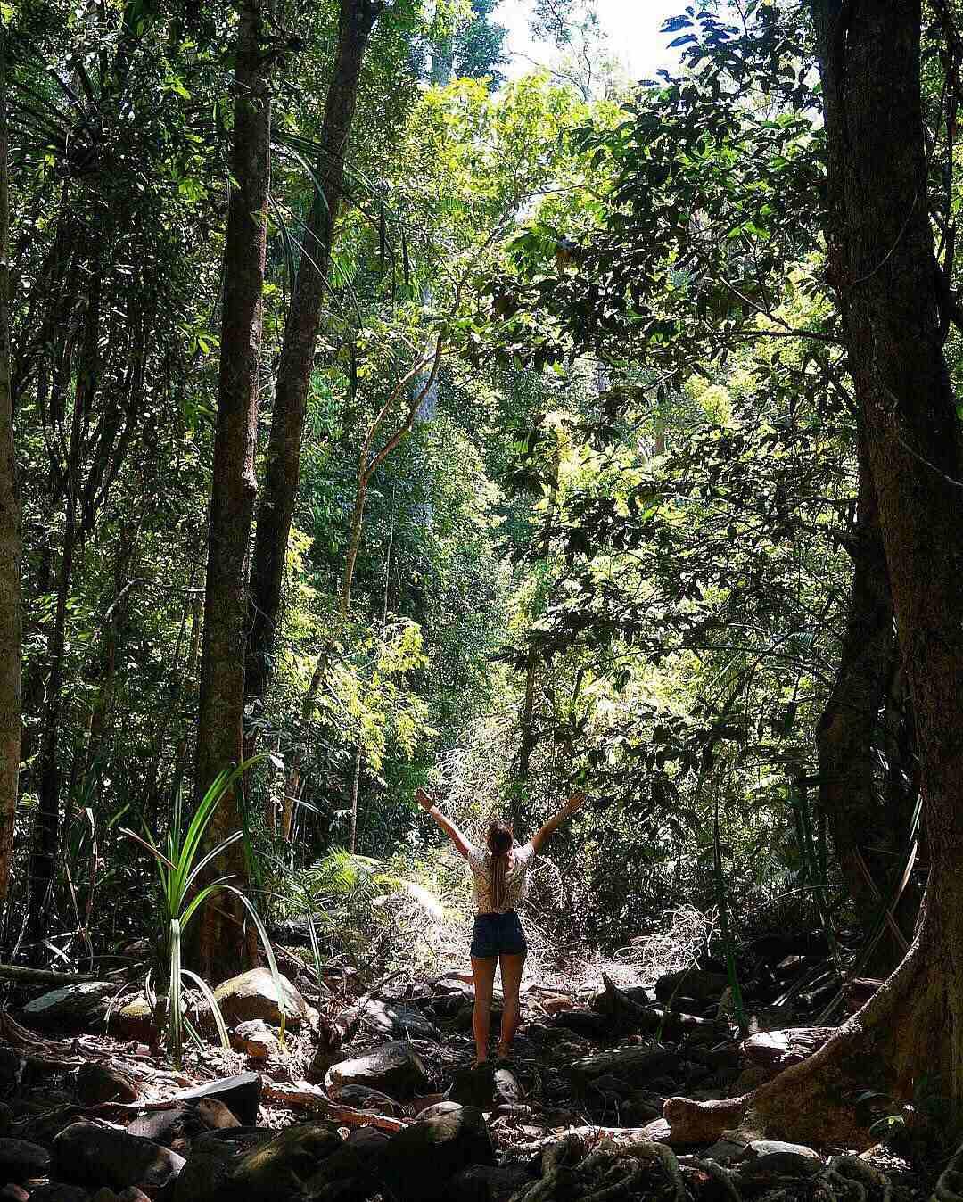 jungle in het Tarutao National Park