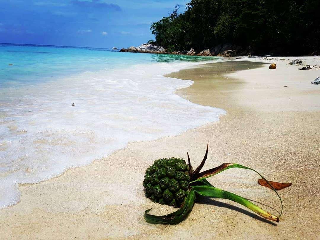 Aangespoelde plant op Koh Lipe