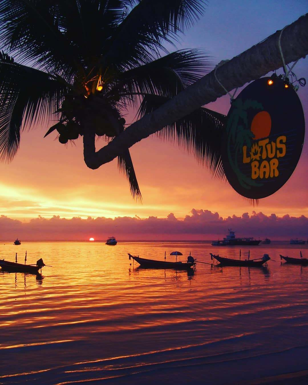 De palmboom van Lotus Bar op Sairee Beach, Koh Tao tijdens zonsondergang
