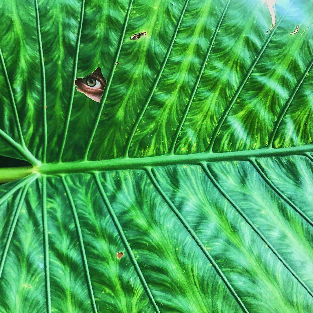 Oog door een blad in het Tarutao National Park