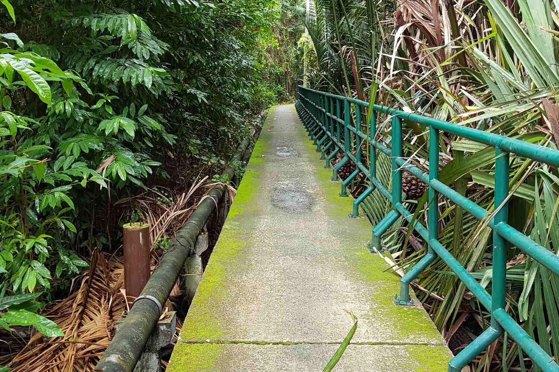pad omgeven door weelderig groen