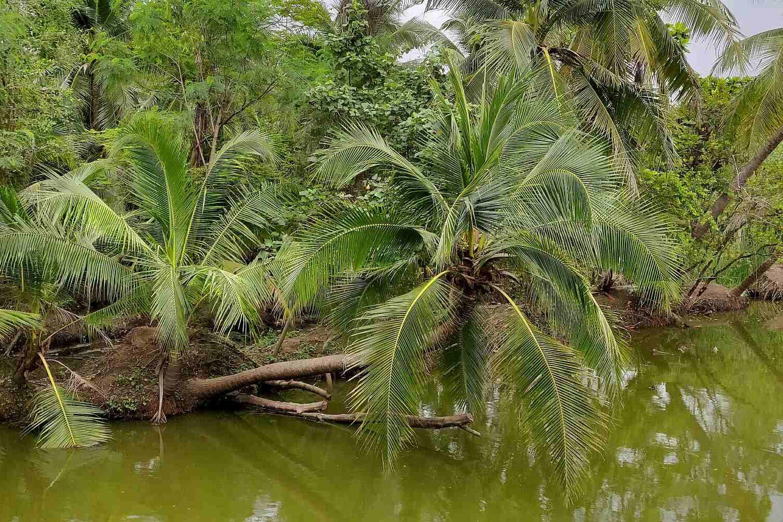 Palmbomen bijna in het water in Sri Nakhon Khuean Khan Park And Botanical Garden