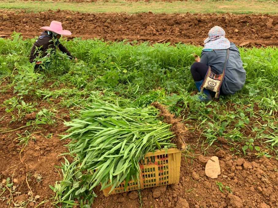 Het stuk grond waar Baan Khanitha zelf hun groenten, fruit en kruiden verbouwen