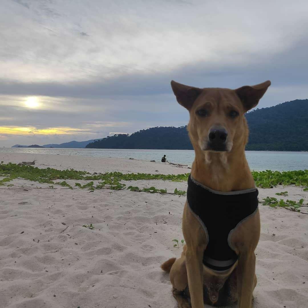 Hondje dichterbij op het strand van Koh Lipe