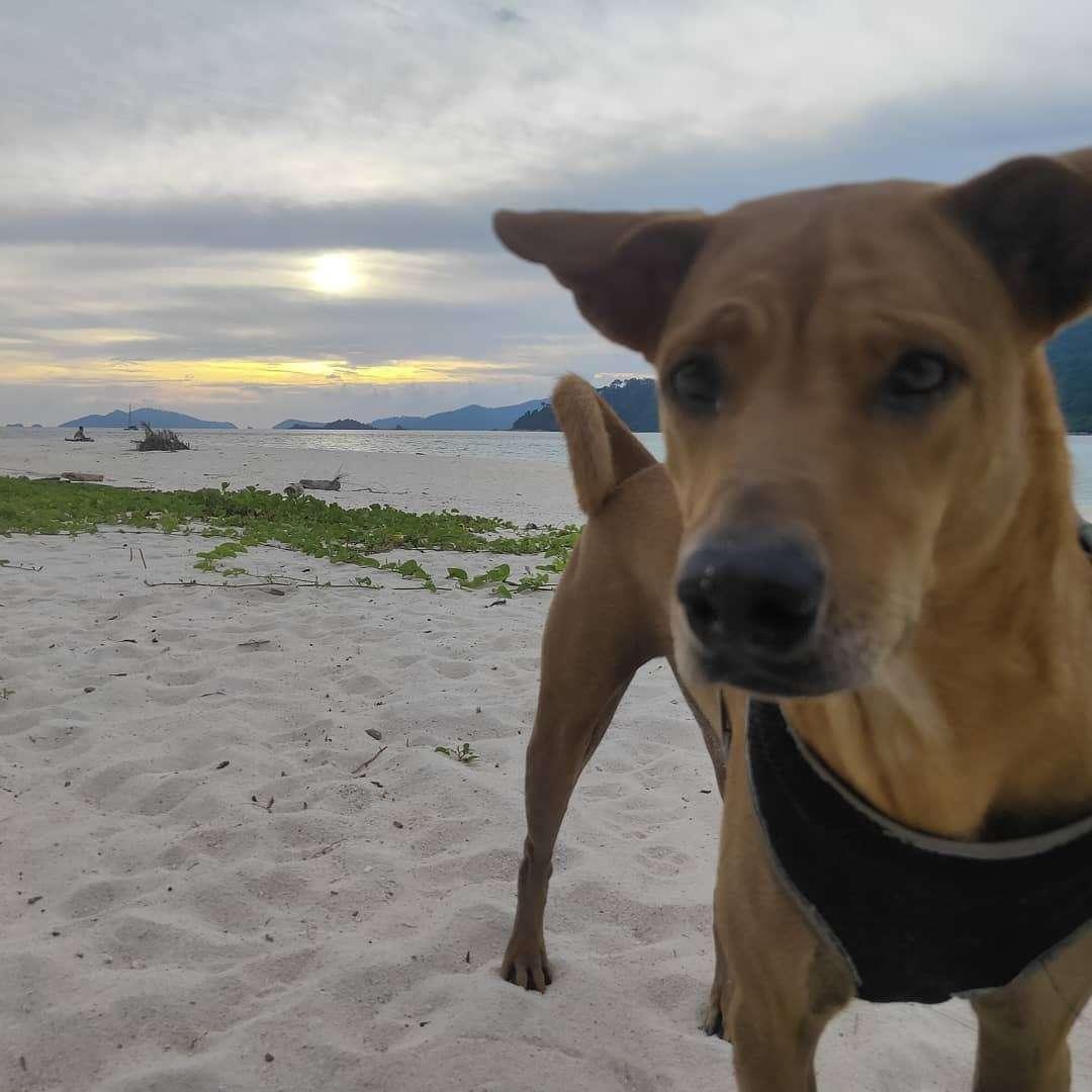 Hondje nog dichterbij op het strand van Koh Lipe