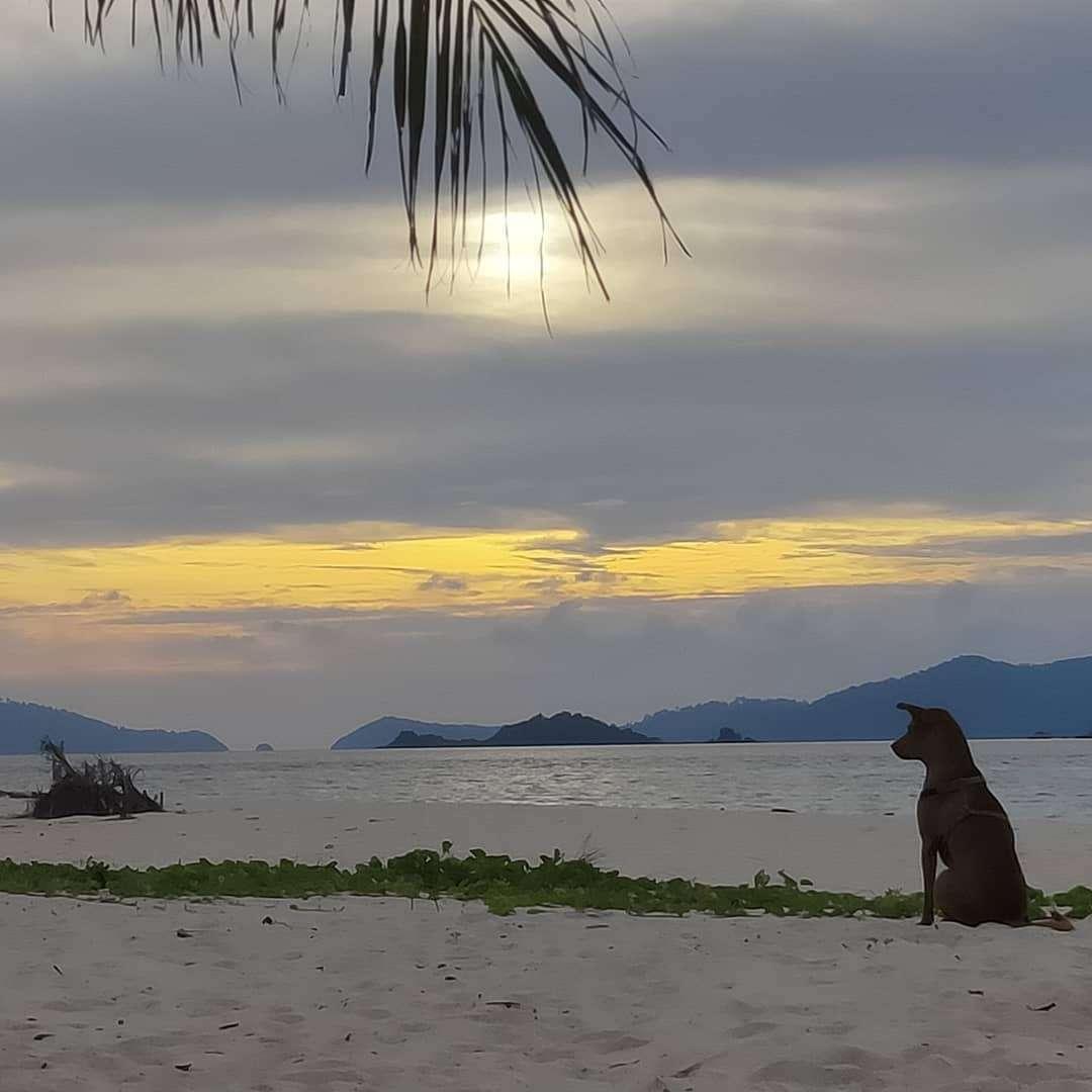 Hondje op het strand van Koh Lipe