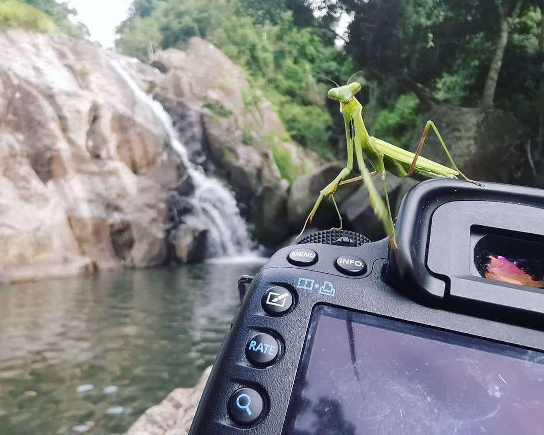 Bidsprinkhaan (mantis) op een fototoestel