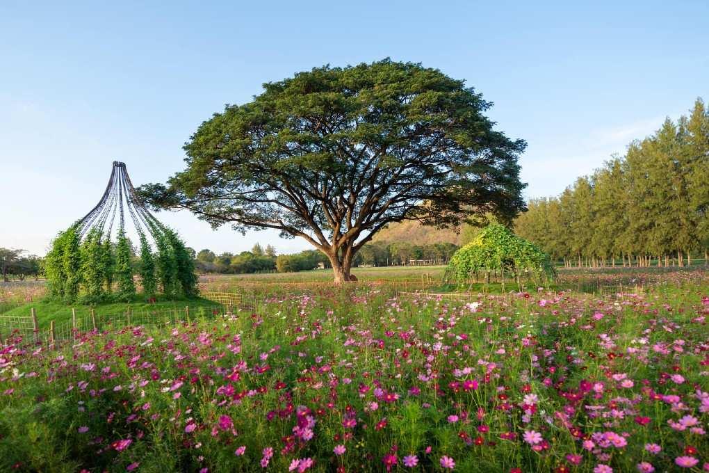 Het Jim Thompson Farm terrein met prachtig gekleurde bloemen en een grote boom