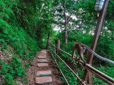 The Monkey Trail In Ao Nang