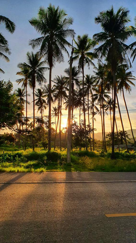 Palm trees in the sun on Ao Nang