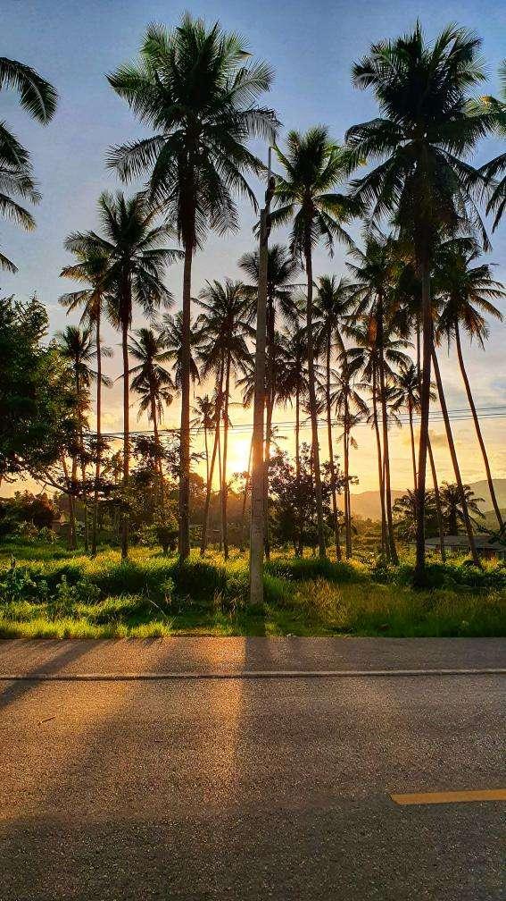 Palmbomen in de zon op Ao Nang