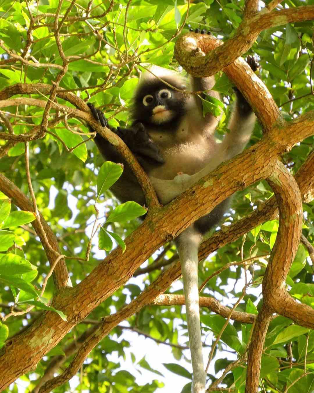 Een aapje in Ao Nang