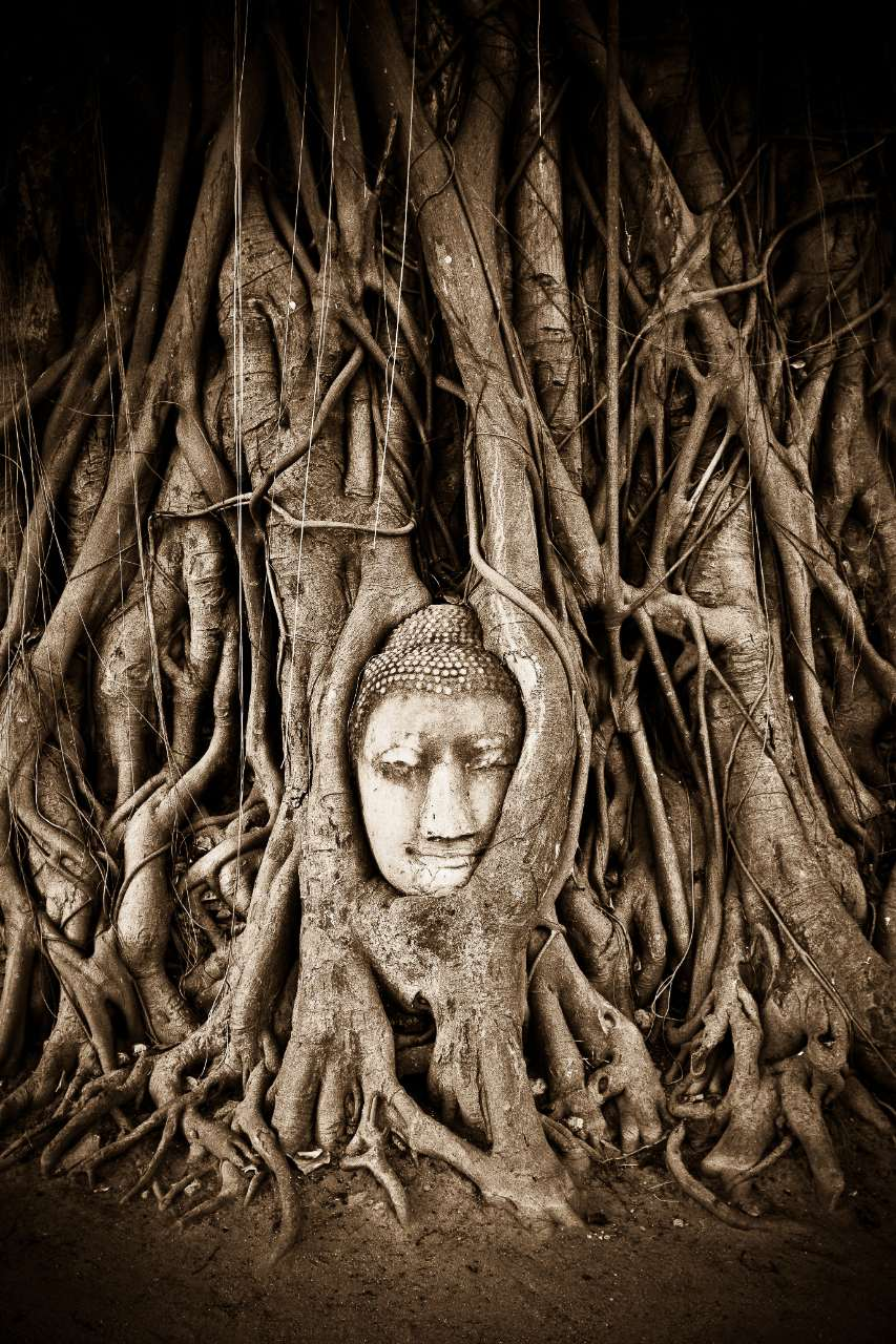 One of Thailand's' most famous Buddha statues, The stone Buddha head of Ayutthaya has set into the branches of a tree after being abandoned for nearly 500 years. This photograph was featured in National Geographic as their 'Photo of the Day'.