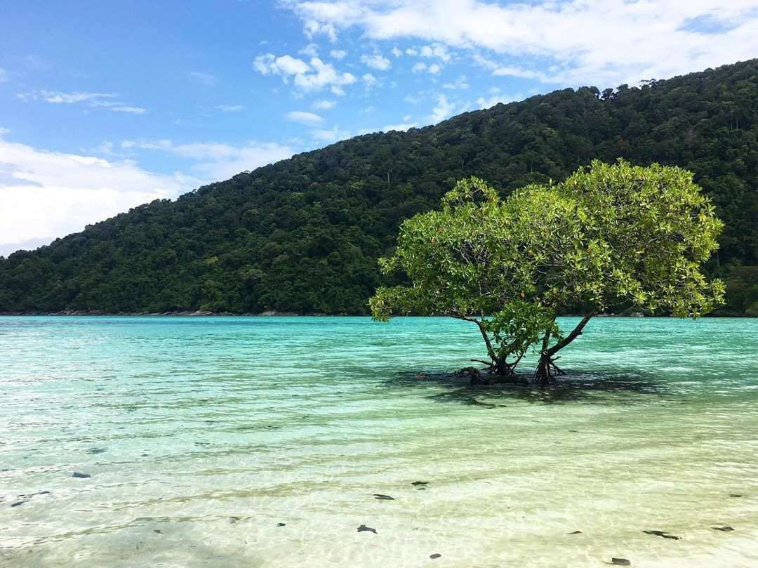 Tree in the seawater off the coast of the Surin Islands