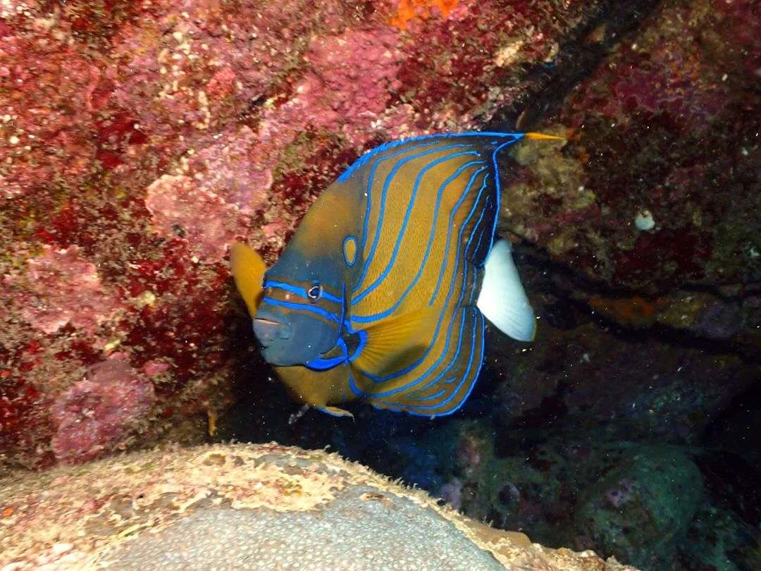 Beautiful fish in the water of the Surin Islands