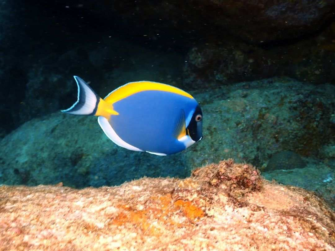 Dory in the sea of the Surin Islands