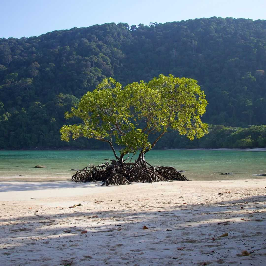 Tree on the beach of the Surin Islands