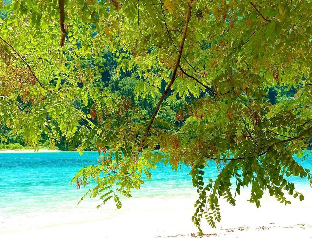 Green bushes, white sand and blue seawater